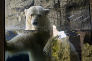 gus - polar bear - funktionslust essay - photo
